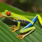 Animals_Amazon_Rainforest2