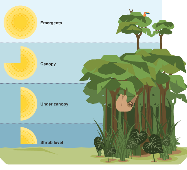 The 4 layers of the amazon rainforest the amazing amazon for Animals that live in soil for kids